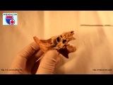Canalis ossis temporalis. Нормальная анатомия каналов височной кости